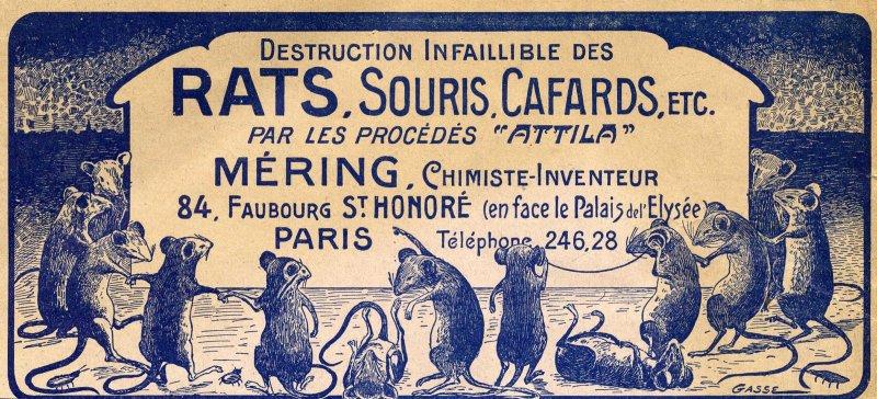 Rats souris ...